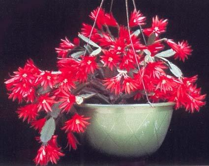 Cosa acquisto forum di for Acquisto piante