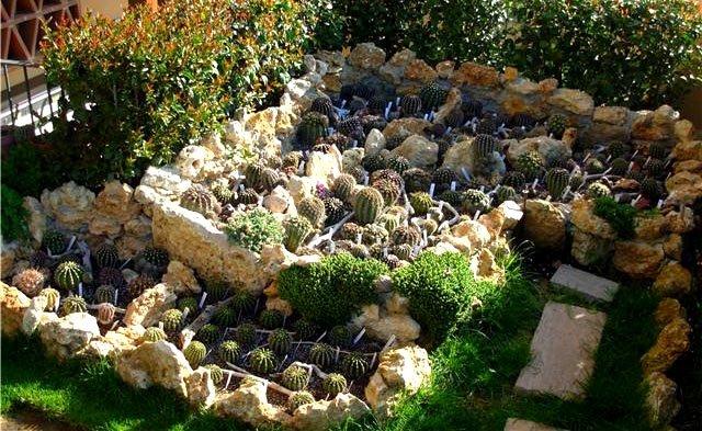 Momesso fotogallerie cactus e dintorni il sito per for Giardino roccioso